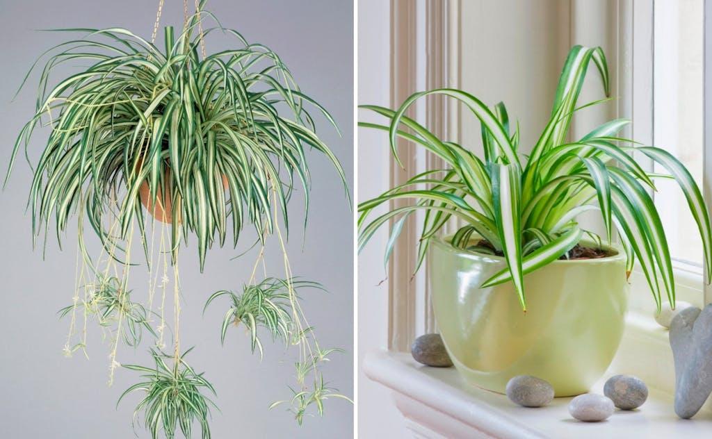 Das Sind Die 10 Besten Pflanzen Fur Ein Gutes Raumklima