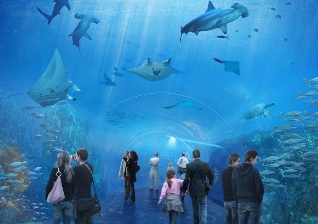 nausicaa deviendra l 39 un des plus grands aquariums du monde au printemps. Black Bedroom Furniture Sets. Home Design Ideas
