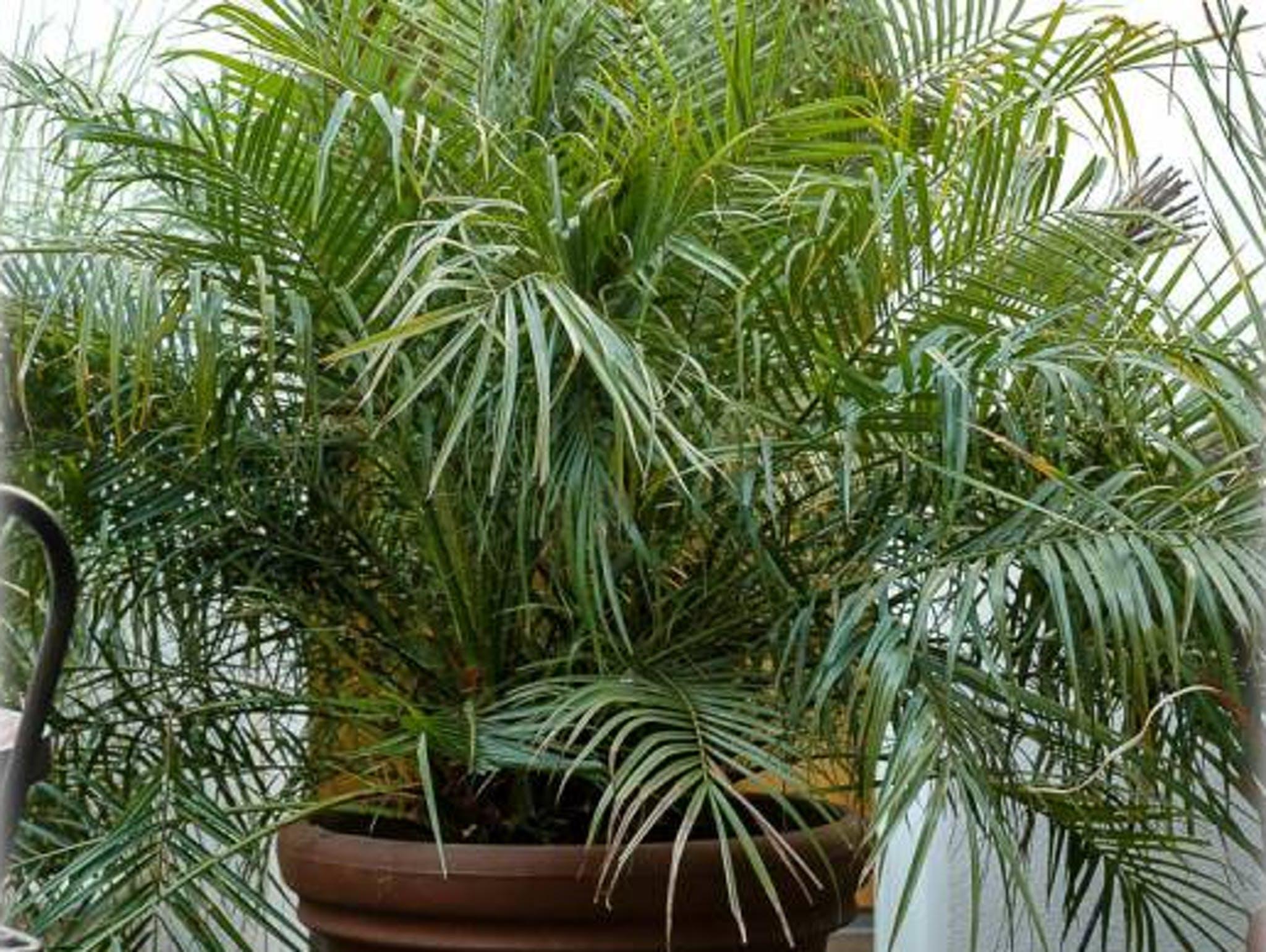 Palme Da Vaso Per Esterno le 10 migliori piante da interno per una buona qualità dell'aria
