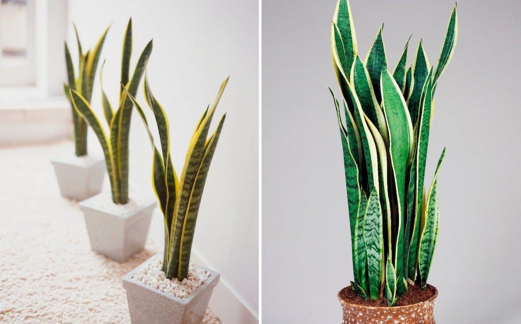 Le 10 migliori piante da interno per una buona qualità ...