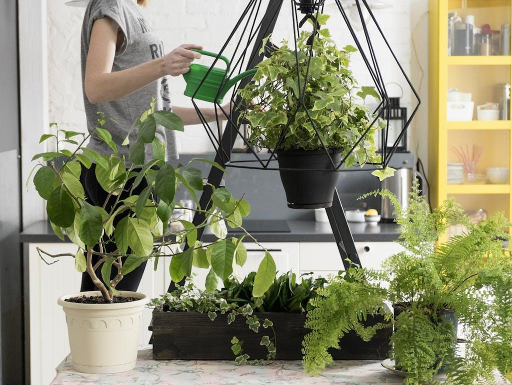 Le 10 migliori piante da interno per una buona qualit for Piante verdi da interno
