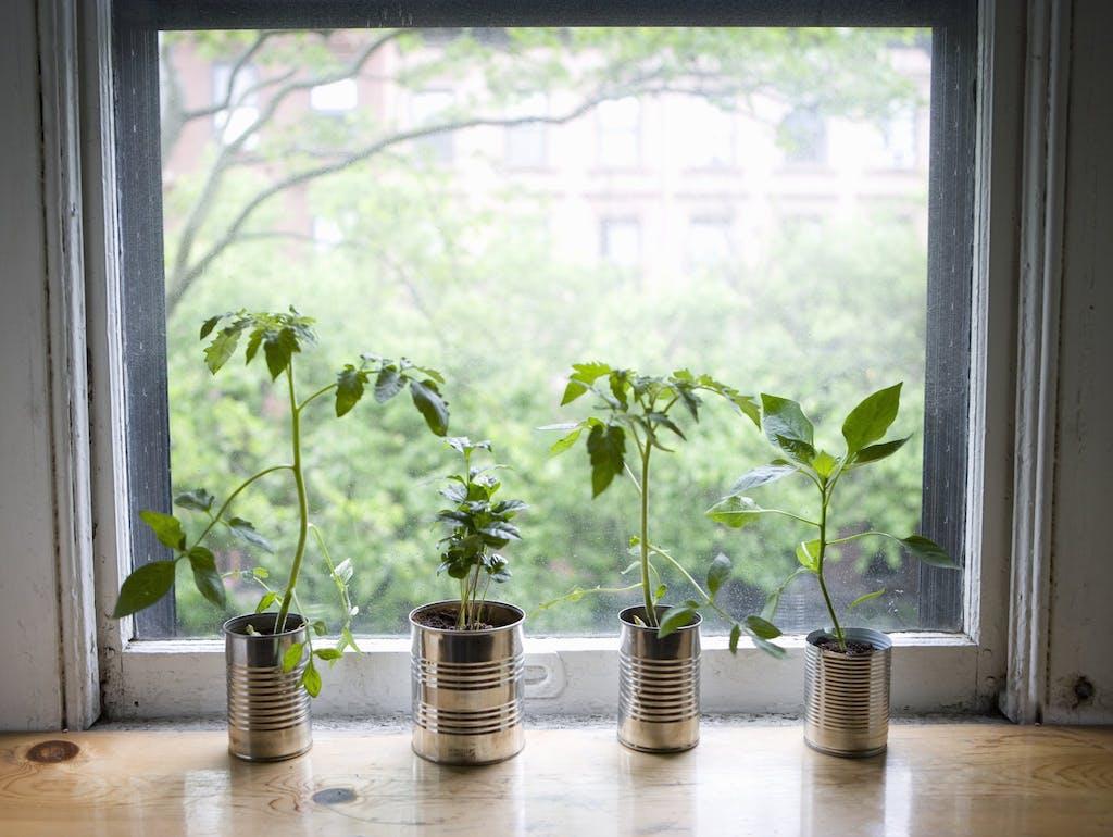 Le 10 migliori piante da interno per una buona qualit - Piante da interno purifica aria ...