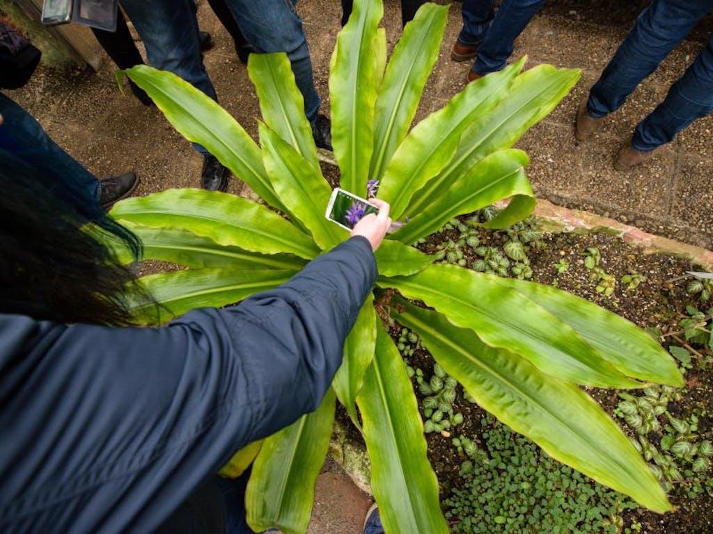welche pflanze ist das? app gibt auskunft