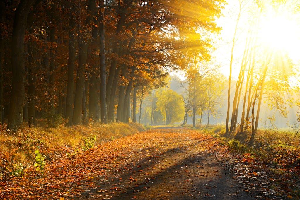 Müdigkeit Herbst