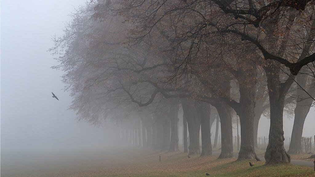 anello albero datazione