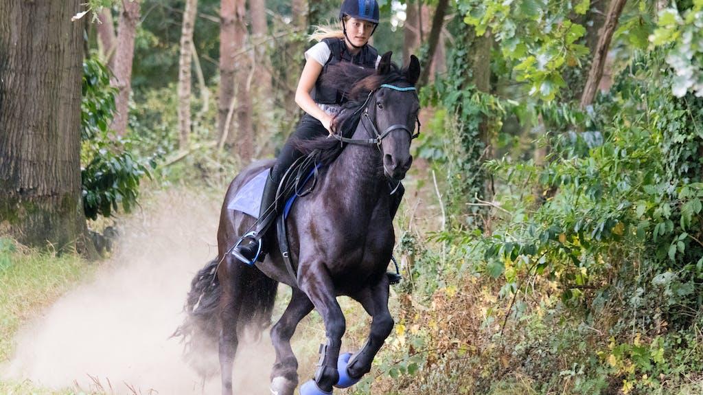 reiterin fürchtet um ihr leben  sozialarbeiter jagt pferd