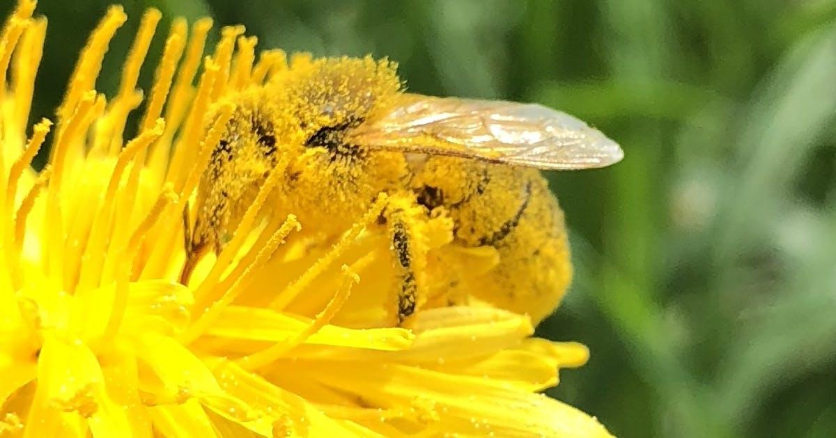 Ohne Bienen würden die meisten Pflanzen nicht existieren