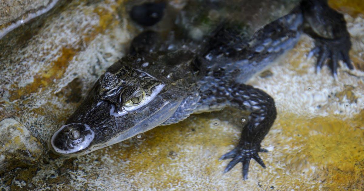 Reptil Kreuzworträtsel
