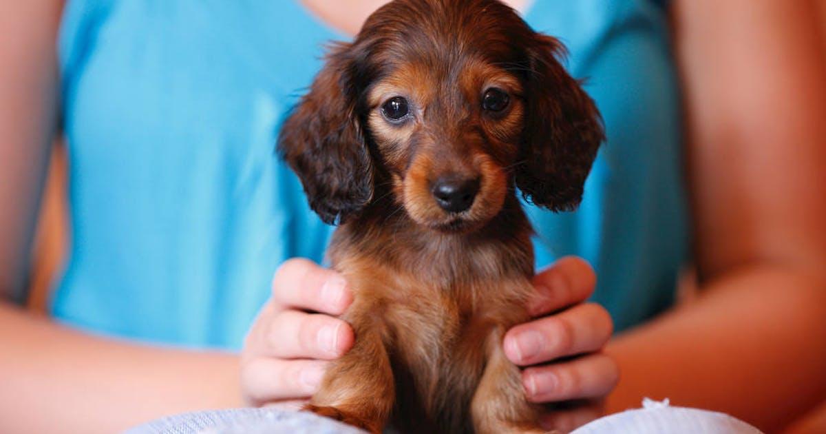 Animali domestici carezze antistress for Area clienti 3 servizi in abbonamento