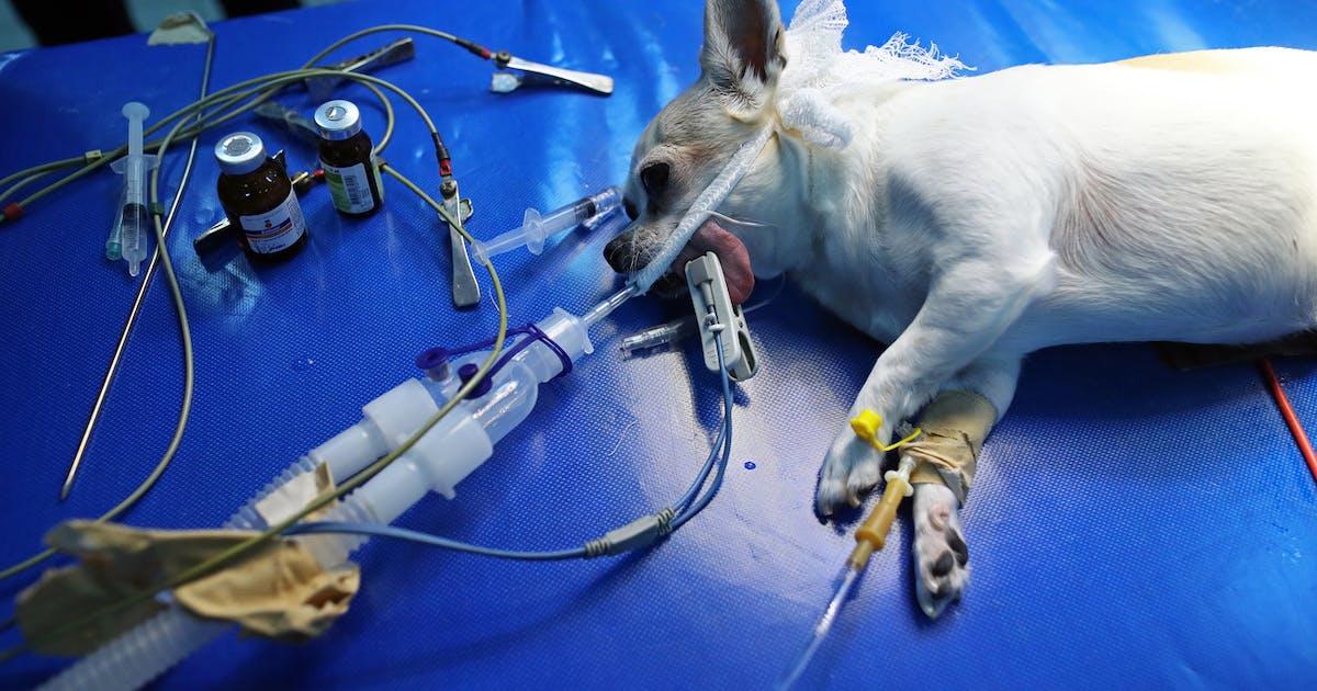 Hunde Sterben In Norwegen