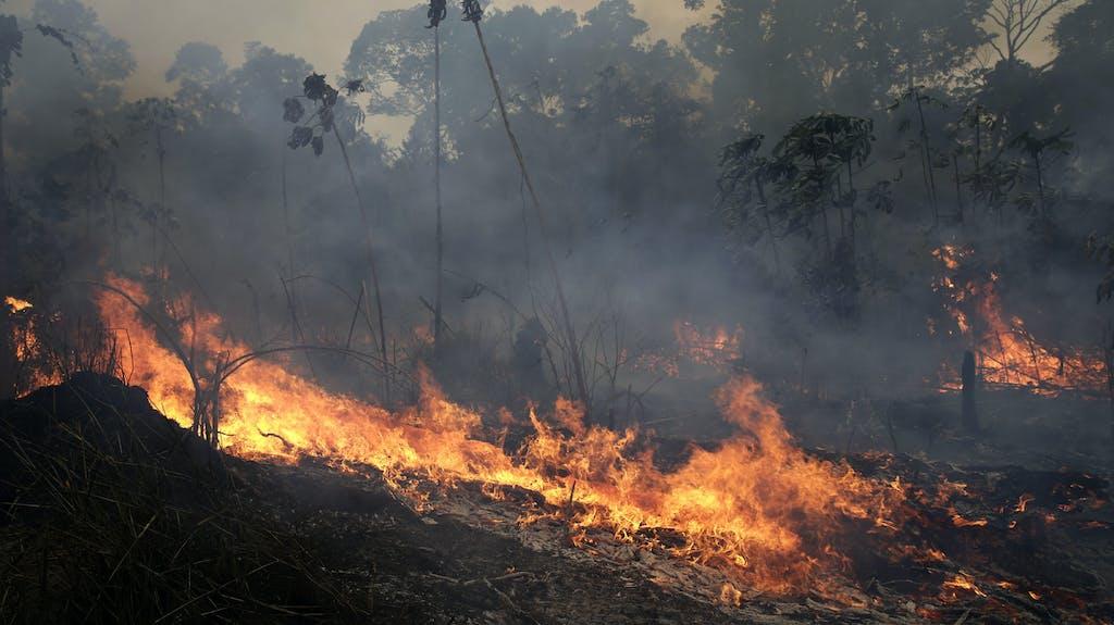 brennt der amazonas noch