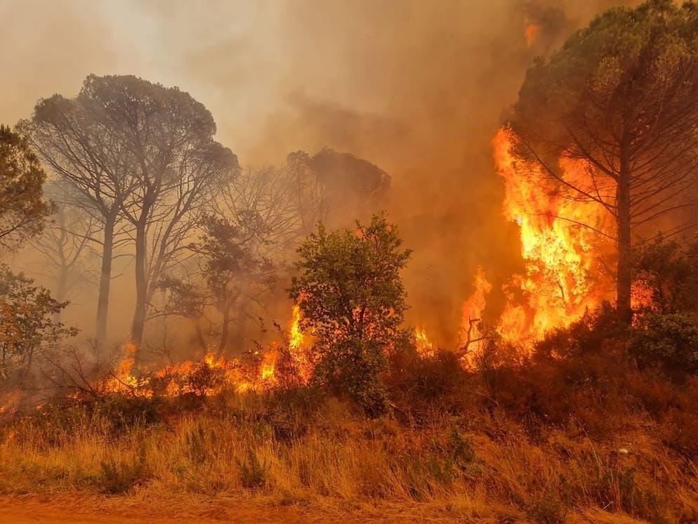 Sur cette photo fournie par les sapeurs-pompiers du Var, un incendie de forêt fait rage près du Luc, mercredi 18 août 2021.