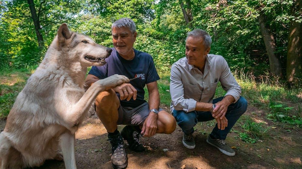 Hannes Jaenicke (r.) mit dem Wissenschaftler Kurt Kortschal (l.) im Wolfforschungszentrum WolfScienceCenter in Ernstbrunn, Österreich. Kurt Kotrschal und seine Kolleginnen haben alle