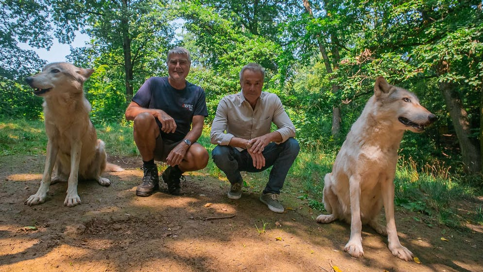 Hannes Jaenicke (r.) und der Verhaltensforscher Kurt Kotrschal, (l.) mit den beiden Wölfen Chitto und Tala im Wolfsforschungszentrum WolfScienceCenter in Ernstbrunn, Österreich.