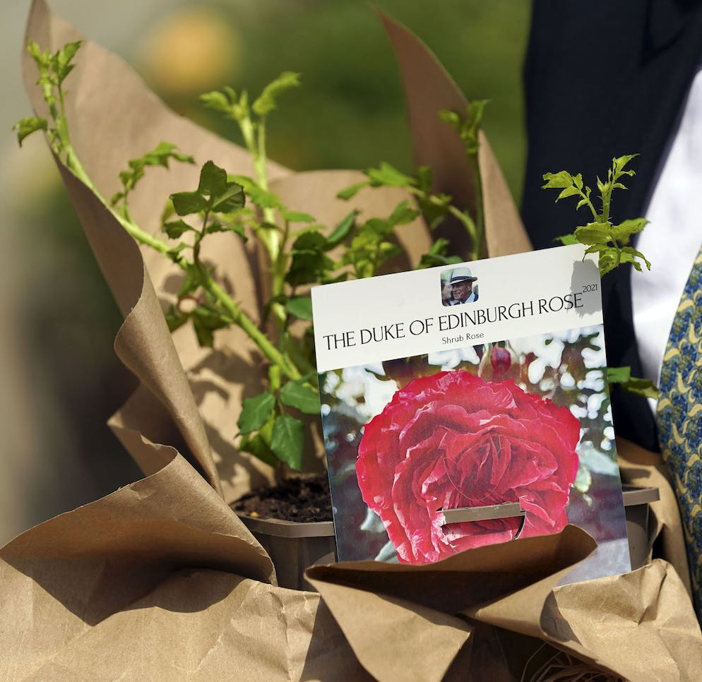 Britain's Queen Elizabeth II receives a Duke of Edinburgh rose, given to her by Keith Weed, President of the Royal Horticultural Society, at Windsor Castle, England, Wednesday, June 9, 2021. The newly bred deep pink commemorative rose has officially been named in memory of the late Prince Philip Duke of Edinburgh. A royalty from the sale of each rose will go to The Duke of Edinburgh's Award Living Legacy Fund to support young people taking part in the Duke of Edinburgh Award scheme. (Steve Parsons/Pool via AP)