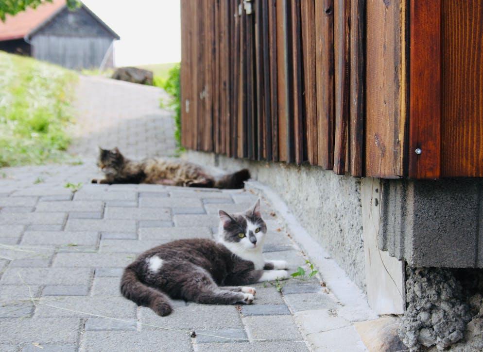 Katzen von Bauer Walter Signer